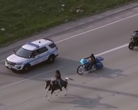 Horse May Need to be Euthanized After Black Lives Matter Hero Rides Horse Close to Death on the Freeway
