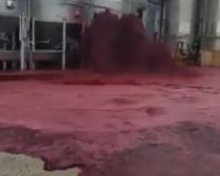 EPIC DISASTER: 50,000 Liters of Red Wine Shoots 10 ft in the Air for Hours (VIDEO)